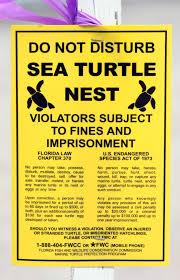 Sea turtle next warning