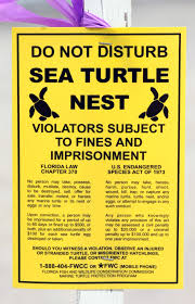 Sea turtle next warning